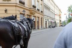 foto-km.com-2019-04-24-ZAMEK-WAWELSKI-W-KRAKOWIE-POLSKA-004