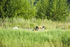 foto-km.com-2019.07.11-SŁUBICE-MIEJSKIE-ŚWIĘTO-HANZY-008